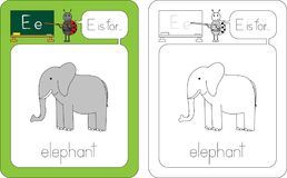 Flashcard letter E. Flashcard for English language - letter e is for elephant Royalty Free Stock Image
