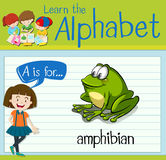 Flashcard letter A is for amphibian. Illustration Stock Images