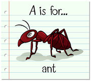 Flashcard letter A is for ant Royalty Free Stock Photography