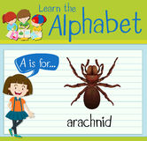 Flashcard letter A is for arachnid Stock Photography