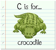 Flashcard letter C is for crocodile Royalty Free Stock Photos