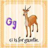 Flashcard letter G is for gazelle Stock Photos