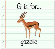 Flashcard letter G is for gazelle Royalty Free Stock Image