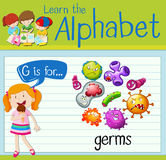 Flashcard letter G is for germs Stock Image