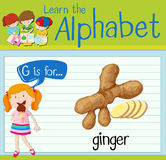 Flashcard letter G is for ginger Stock Image