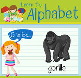 Flashcard letter G is for gorilla Stock Images