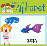 Flashcard letter G is for guppy Royalty Free Stock Photo