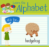 Flashcard letter H is for hedgehog Stock Photos