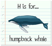Flashcard letter H is for humpback whale Stock Photography