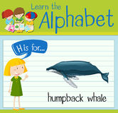Flashcard letter H is for humpback whale. Illustration Stock Photography
