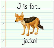 Flashcard letter J is for jackal Royalty Free Stock Images