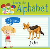 Flashcard letter J is for jackal Stock Photography