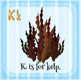 Flashcard letter K is for kelp Stock Photo