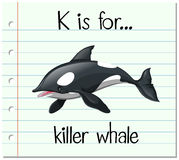 Flashcard letter K is for killer whale Stock Images