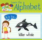 Flashcard letter K is for killer whale. Illustration Royalty Free Stock Image