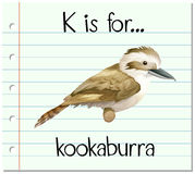Flashcard letter K is for kookaburra Royalty Free Stock Photography