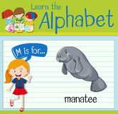Flashcard letter M is for manatee Royalty Free Stock Images