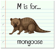 Flashcard letter M is for mongoose Royalty Free Stock Images