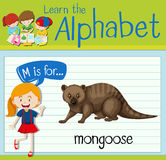 Flashcard letter M is for mongoose Stock Photography