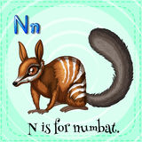 Flashcard letter N is for numbat Royalty Free Stock Images