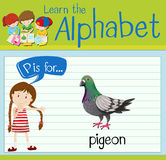 Flashcard letter P is for pigeon Royalty Free Stock Photos