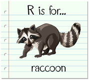 Flashcard letter R is for raccoon Royalty Free Stock Image