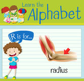 Flashcard letter R is for radius. Illustration vector illustration