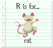 Flashcard letter R is for rat Royalty Free Stock Photos