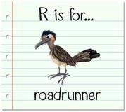 Flashcard letter R is for roadrunner Royalty Free Stock Image