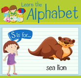 Flashcard letter S is for sea lion Stock Photography