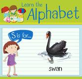 Flashcard letter S is for swan Royalty Free Stock Image
