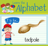 Flashcard letter T is for tadpole. Illustration Stock Photos