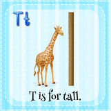 Flashcard letter T is for tall Royalty Free Stock Photos