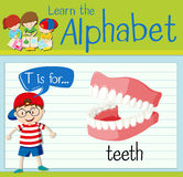 Flashcard letter T is for teeth Royalty Free Stock Image
