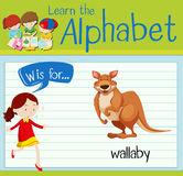 Flashcard letter W is for wallaby. Illustration Stock Photos