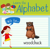 Flashcard letter W is for woodchuck Stock Image
