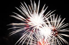 Flashes of white and red holiday firework against the black sky. Royalty Free Stock Image