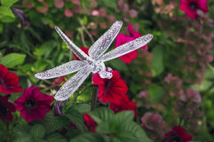 Flashlight dragonfly in the colors of petunias stock photo