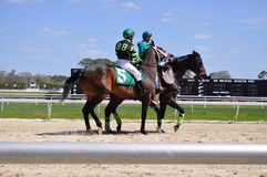 Flashy Won placed in the third race today at the Tampa Bay Downs. Stock Images
