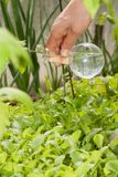 Flask with clear water  and green plants Royalty Free Stock Photography