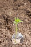 Flask with clear water and plant on dry soil Royalty Free Stock Photo