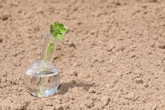 Flask with clear water and plant on dry soil Royalty Free Stock Images