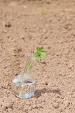 Flask with clear water and plant on dry soil Royalty Free Stock Photos