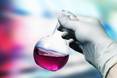 Flask in hand. Chemistry samples for example virus Swine Flu Royalty Free Stock Photo