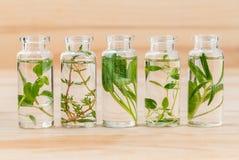 Flaska av citrontimjan för nödvändig olja, timjan, oregano, rosmarin och Arkivfoto