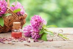 Flaska av elixir eller nödvändig olja och grupp av växt av släktet Trifolium Royaltyfri Foto