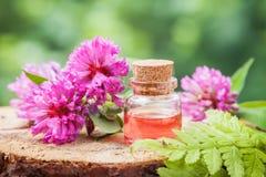 Flaska av elixir eller nödvändig olja och grupp av växt av släktet Trifolium Royaltyfri Bild