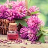 Flaska av elixir eller nödvändig olja och växt av släktet Trifolium i korg Royaltyfri Bild