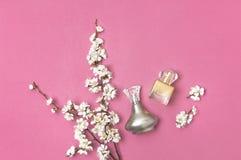 Flaska av kvinnadoft och filial av körsbärsröda vita blommor för våraprikos på ljus rosa bakgrund Skönhet parfymeriaffär, skönhet arkivfoton