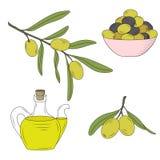 Flaska av olja och filialen av olivträdet Royaltyfri Bild